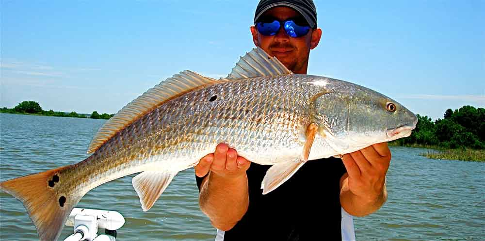Crystal river redfish k5 fishing charters for Red drum fishing